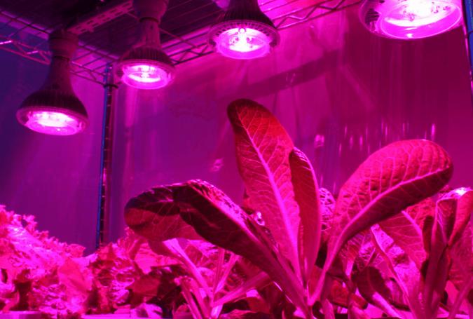 Светодиодные светильники для домашних цветков