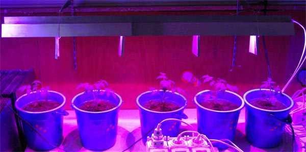 Расстояние от излучателя до растения 25-40 см.