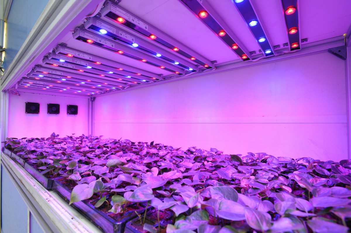 Светодиодные светильники для тепличных построек