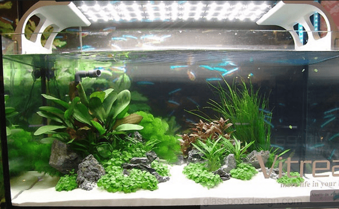 Освещение аквариумных растений светодиодными лампами