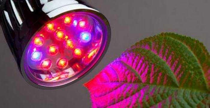 Светодиодное освещение парников