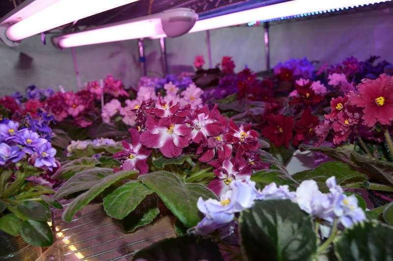 Дополнительное освещение для растений
