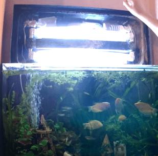 Аквариум с энергосберегающими лампами