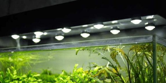 Освещение аквариума системой светодиодных ламп