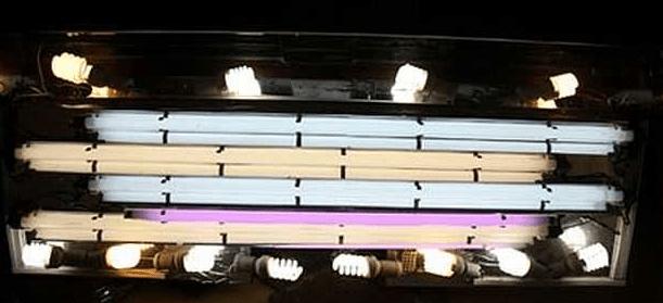 Правильное освещение аквариума, достигнутое использованием различных типов ламп