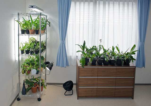 Досветка растений при наличии природного источника