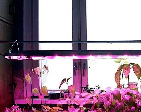Пример конструкции для подсветки саженцев фито светодиодами