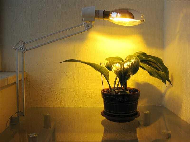 Освещение растения лампой накаливания