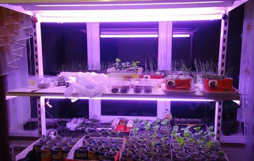 Люминесцентные лампы для роста растений