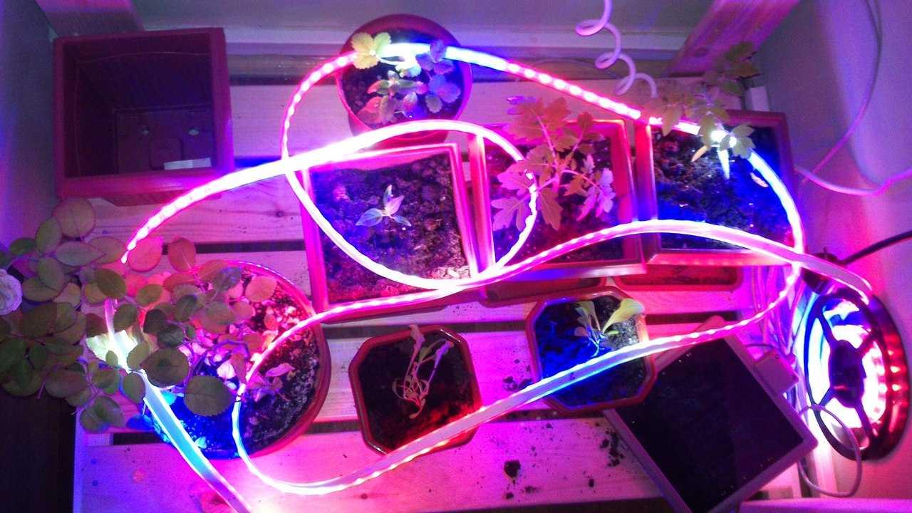 Световая лента для подсветки растений